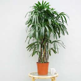 The Palm Centre의  정원