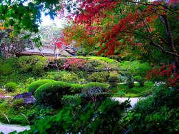 eclectic Garden by Dotto Francesco consulting Green