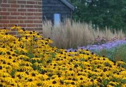 Jardines de estilo rural por Rae Wilkinson Design Ltd