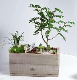 MyHobbyMarket & Peri Bahçem – Bahçede Keyif Minyatür Bahçe:  tarz Ev İçi