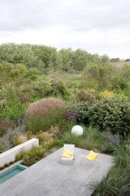 Door slimme erfgrens een natuurlijk overgang naar duinlandschap: moderne Tuin door Andrew van Egmond (ontwerp van tuin en landschap)