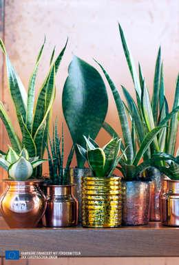 Озеленение  в . Автор – Pflanzenfreude.de