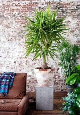 Projekty,  Salon zaprojektowane przez Pflanzenfreude.de