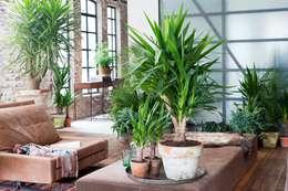 Die Yucca - Zimmerpflanze des Monats Januar: industriale Wohnzimmer von Pflanzenfreude.de