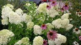 Pflanzplanung Hotelzufahrt Chiemsee: moderner Garten von Blumen & Gärten