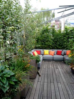 Dachterrassengestaltung München-Au: moderner Garten von Blumen & Gärten
