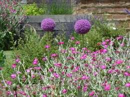 Jardines de estilo rural por Cherry Mills Garden Design
