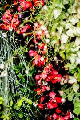 Begonia: Jardines de estilo mediterráneo de thesustainableproject