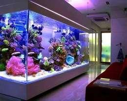Аквариум морской: Домашнее хозяйство  в . Автор – Аквариумный салон 'Мир за стеклом'