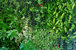 Пышное вертикальное озеленение в частном доме: Озеленение  в . Автор – RaStenia