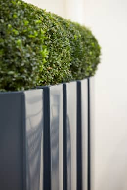 Buxus balls in powder-coated metal planters:  Garden  by FORK Garden Design