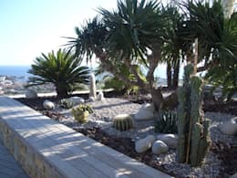 Une jardinière de cactées: Jardin de style de style Moderne par Vanessa Cottin