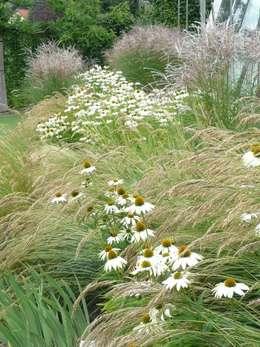 Winterfeste Gräser gräser im garten ein überblick über arten pflege und gestaltung