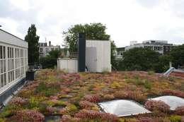 Projekty,  Ogród zaprojektowane przez De Dakdokters