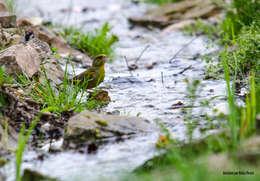 Łyczek wody ze strumyka: styl , w kategorii Ogród zaprojektowany przez Centrum ogrodnicze Ogrody ResGal