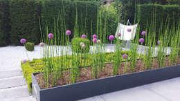 حديقة تنفيذ SUD[D]EN Gärten und Landschaften