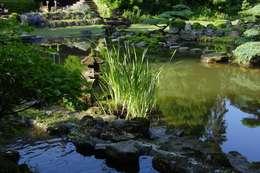 japan-garten-kultur: asyatik tarz tarz Bahçe