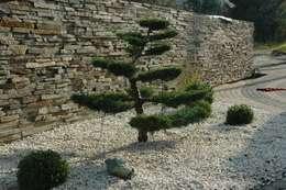 bonsai: styl , w kategorii  zaprojektowany przez greenin