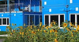 Sonnenblumen:  Schulen von quartier vier Architekten Landschaftsarchitekten