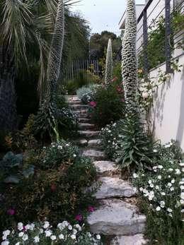 Jardin méditerranée & jardin Mexicain à Cannes: Jardin de style de style Méditerranéen par Nazarian Espaces Verts
