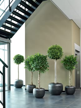 Interior landscaping by fleur ami GmbH