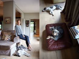 modern Living room by Cloud 7 Finest Interiors for Dogs & Dog Lovers