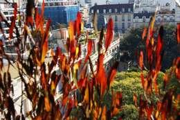 Un Balcón para una Coleccionista de Arte: Terrazas de estilo  por Estudio Nicolas Pierry: Diseño en Arquitectura de Paisajes & Jardines