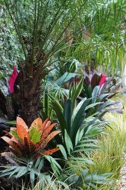 Jardín de Sombra: Jardines de estilo topical por Estudio Nicolas Pierry: Diseño en Arquitectura de Paisajes & Jardines