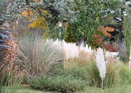 10 plantas de exterior para jardines modernos - Plantas exterior todo el ano ...