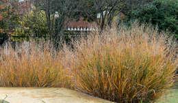 Otoños que enamoran en la villa.. color, textura, sensaciones...: Jardines de estilo moderno por MARIELA DURA ARQUITECTURA PAISAJISTA