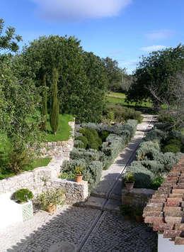 Blick in den östlichen Garten: mediterraner Garten von v. Bismarck Architekt