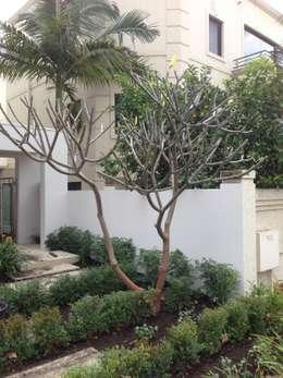 modern Garden by Project Artichoke