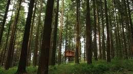 Гостиницы в . Автор – Cabañas en los árboles
