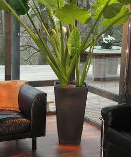 Jardín de estilo  por TerraForm