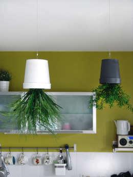 Interior landscaping تنفيذ Adventive