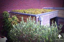 Sedumdak: moderne Tuin door  Ernst Baas Hoveniers B.V. / Ernst Baas Tuininrichting B.V.