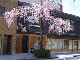 黒漆喰の壁に枝垂れ桜が映える: 一級建築士事務所 ヒモトタクアトリエが手掛けた家です。