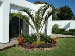 15 jardines sencillos y bonitos que puedes hacer for Palmeras pequenas para jardin