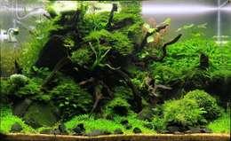 Binnenbeplanting door Aquasabi