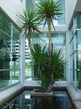 Cantemual: Jardines de estilo moderno por SANTIAGO PARDO ARQUITECTO