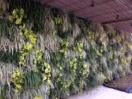 by Top Gardens Paisagismo Vertical