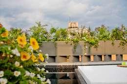 Flor de Mayo Hotel & Restaurant: Jardines de estilo moderno por Elías Arquitectura