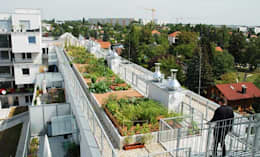 Dachterrasse, Mietergärten: moderner Garten von Kräftner Landschaftsarchitektur