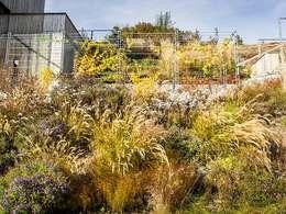 Jardins modernos por Kräftner Landschaftsarchitektur