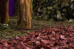 Jardines de invierno de estilo rural por Junia Lobo Paisagismo