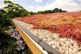 Jardins modernos por Tuindesign & Styling Ves Reynders