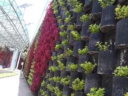 modern Garden by ENFOQUE CONSTRUCTIVO