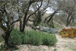 mediterrane Tuin door Hábitas