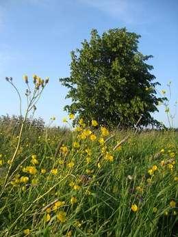 Uitbreiding buitenplaats Vreedenhorst: landelijke Tuin door groenpartners