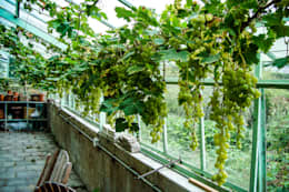 Druiven kas: landelijke Tuin door groenpartners